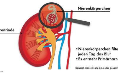 Niereninsuffizienz